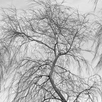 Willow Patterns