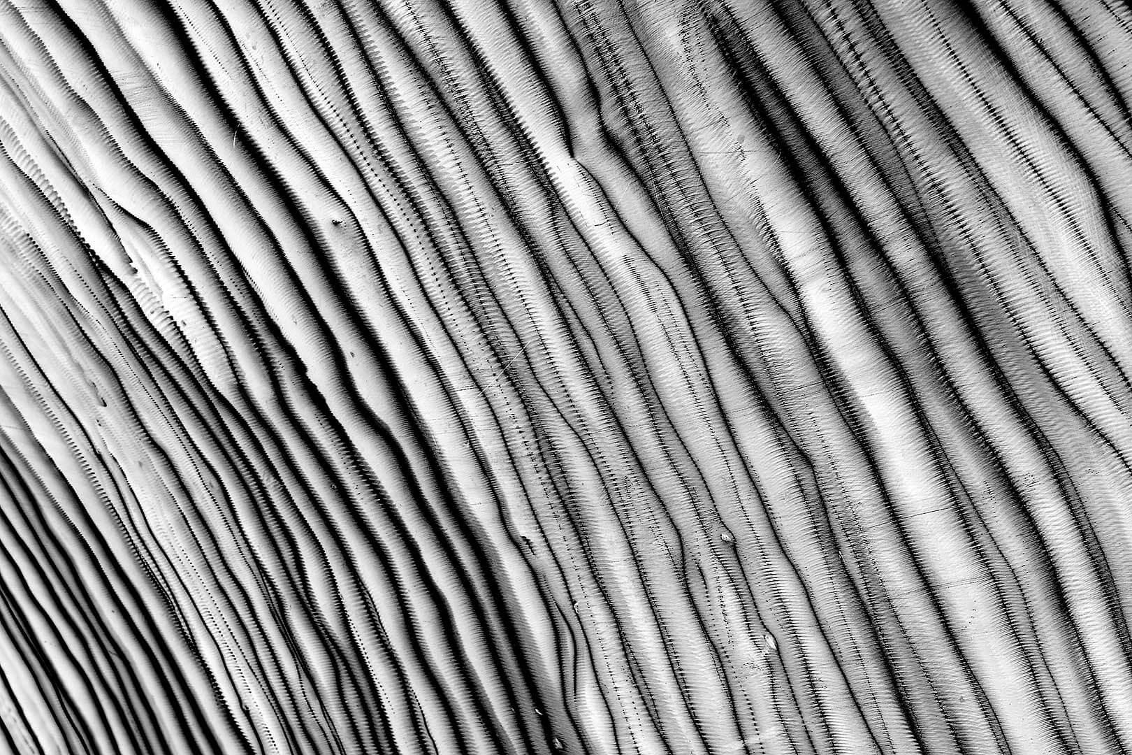 Milestone Abstract