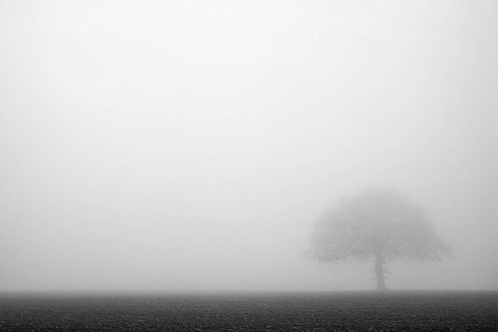Foggy Scape
