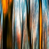 Forest Motion I