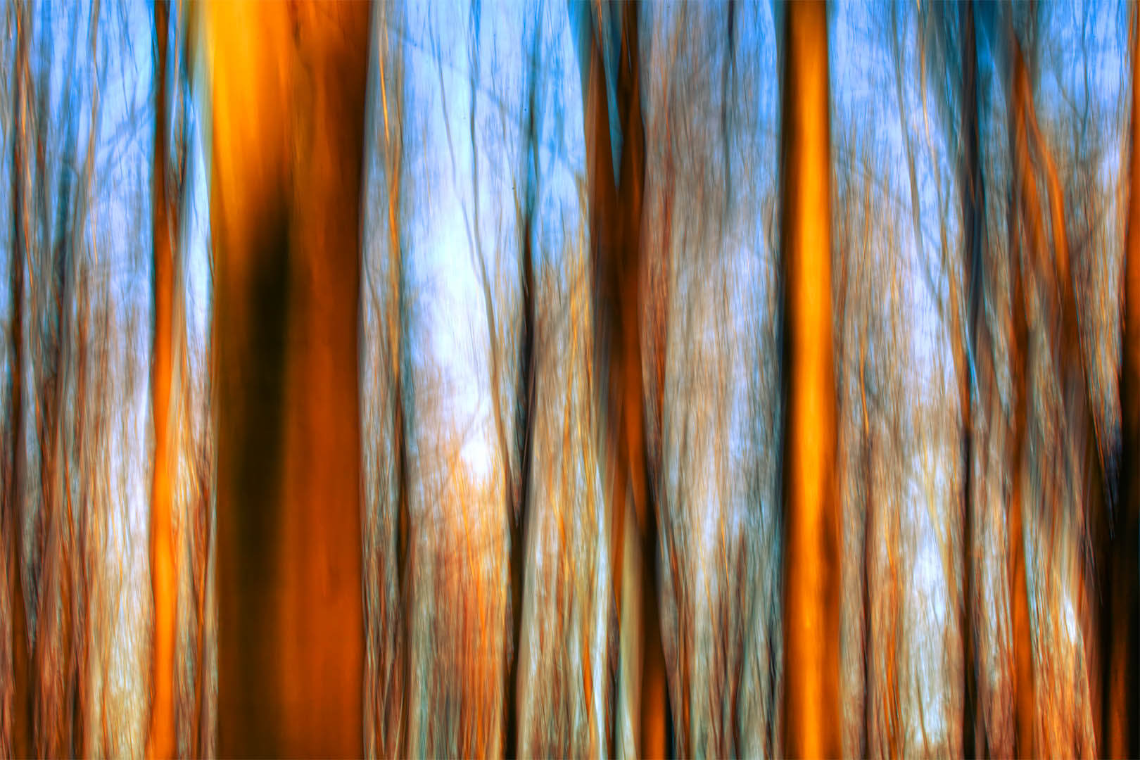 Forest Motion II