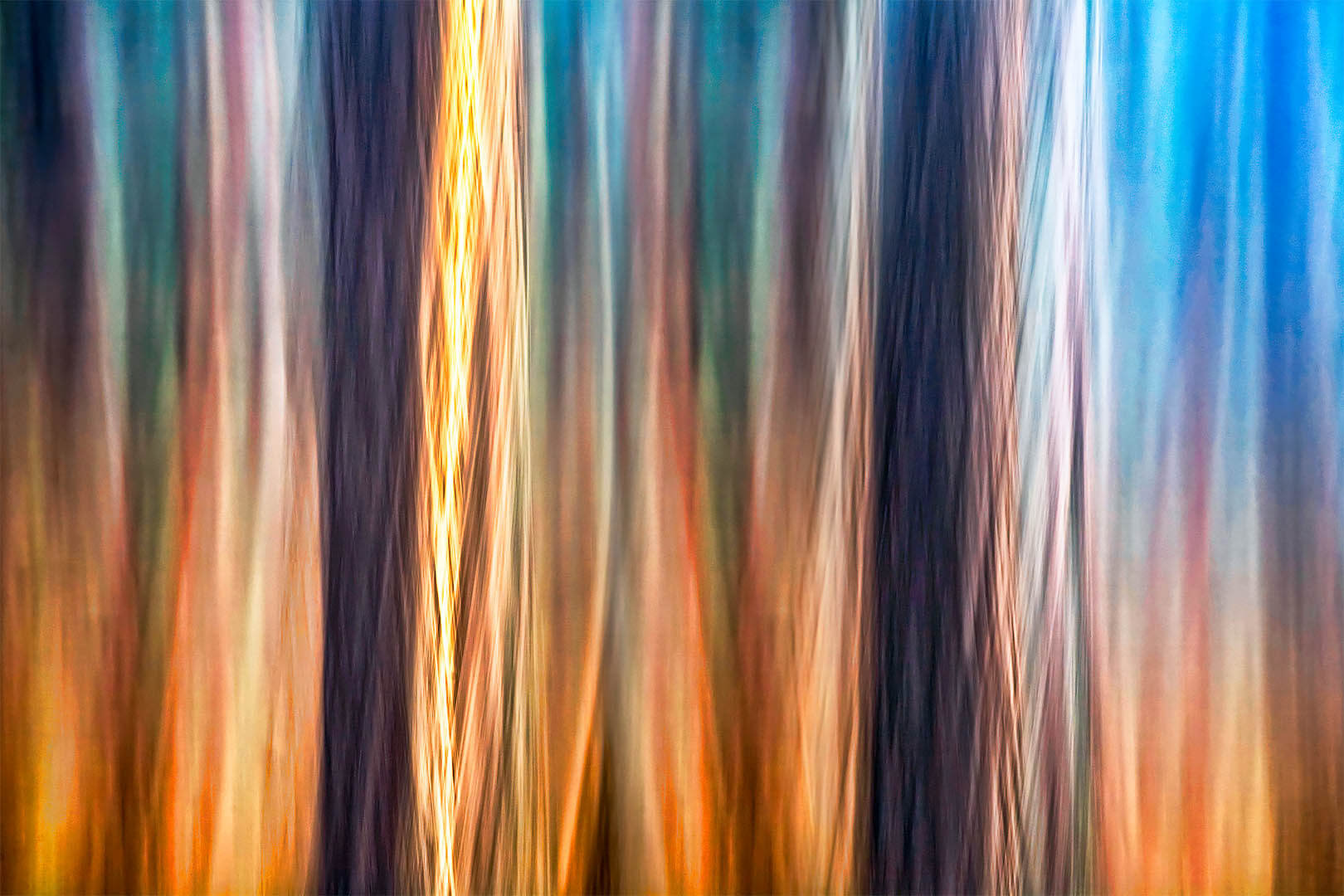 Forest Motion III