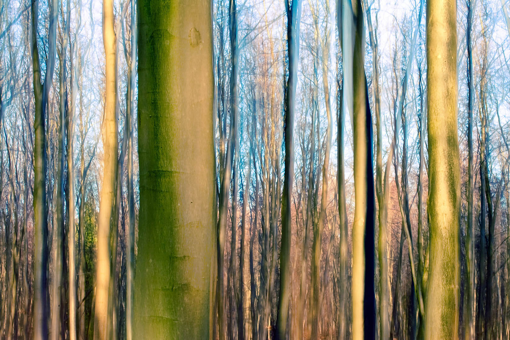 Forest Motion IV