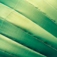 Green Hot Air Balloon Abstract