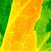 Leaf Texture #2