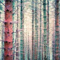 Chawton Park Woods #1