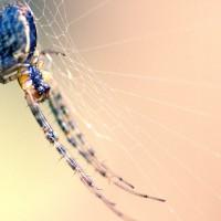 Spider II
