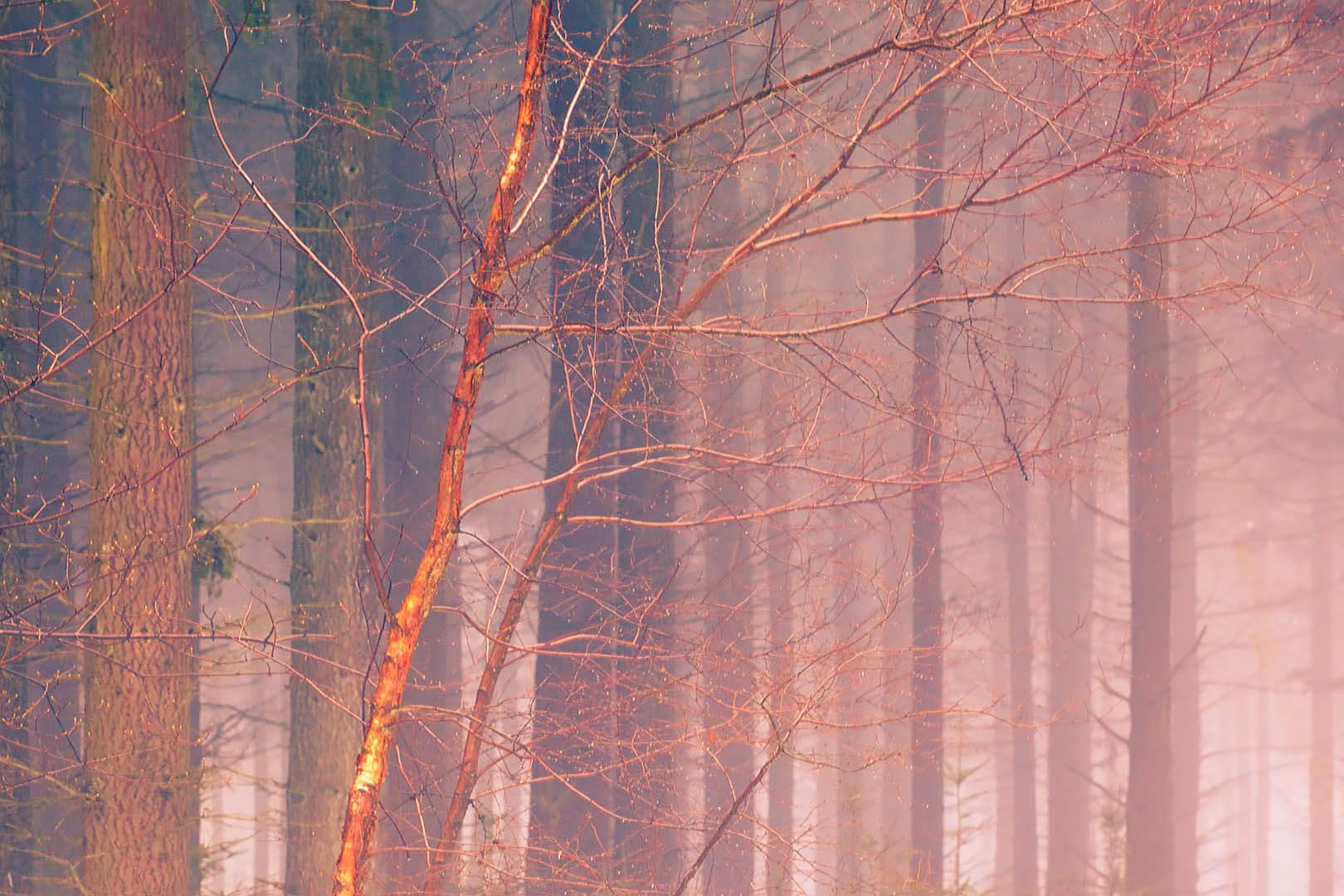 Chawton Park Woods #2