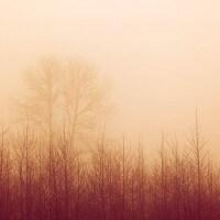 Chawton Park Woods #4