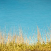 Grass Reflections #1