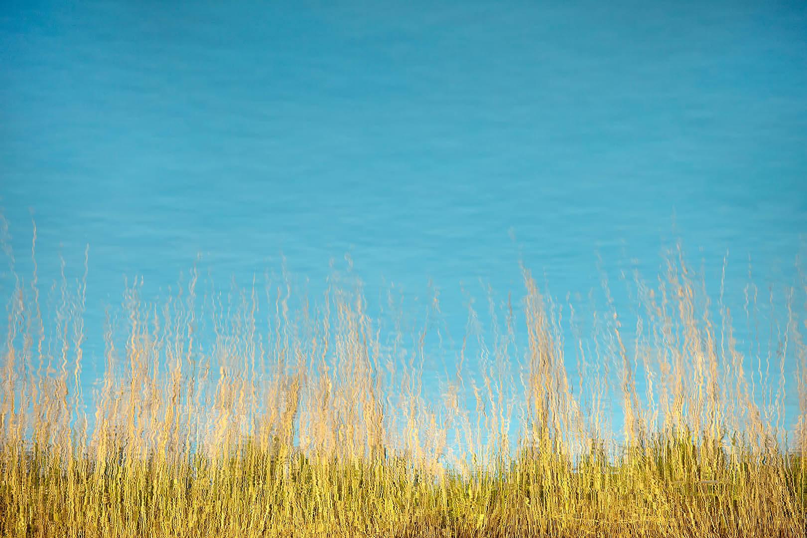 Grass Reflections #1