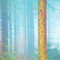 Chawton Park Woods #5