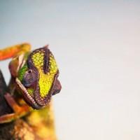 Reptile