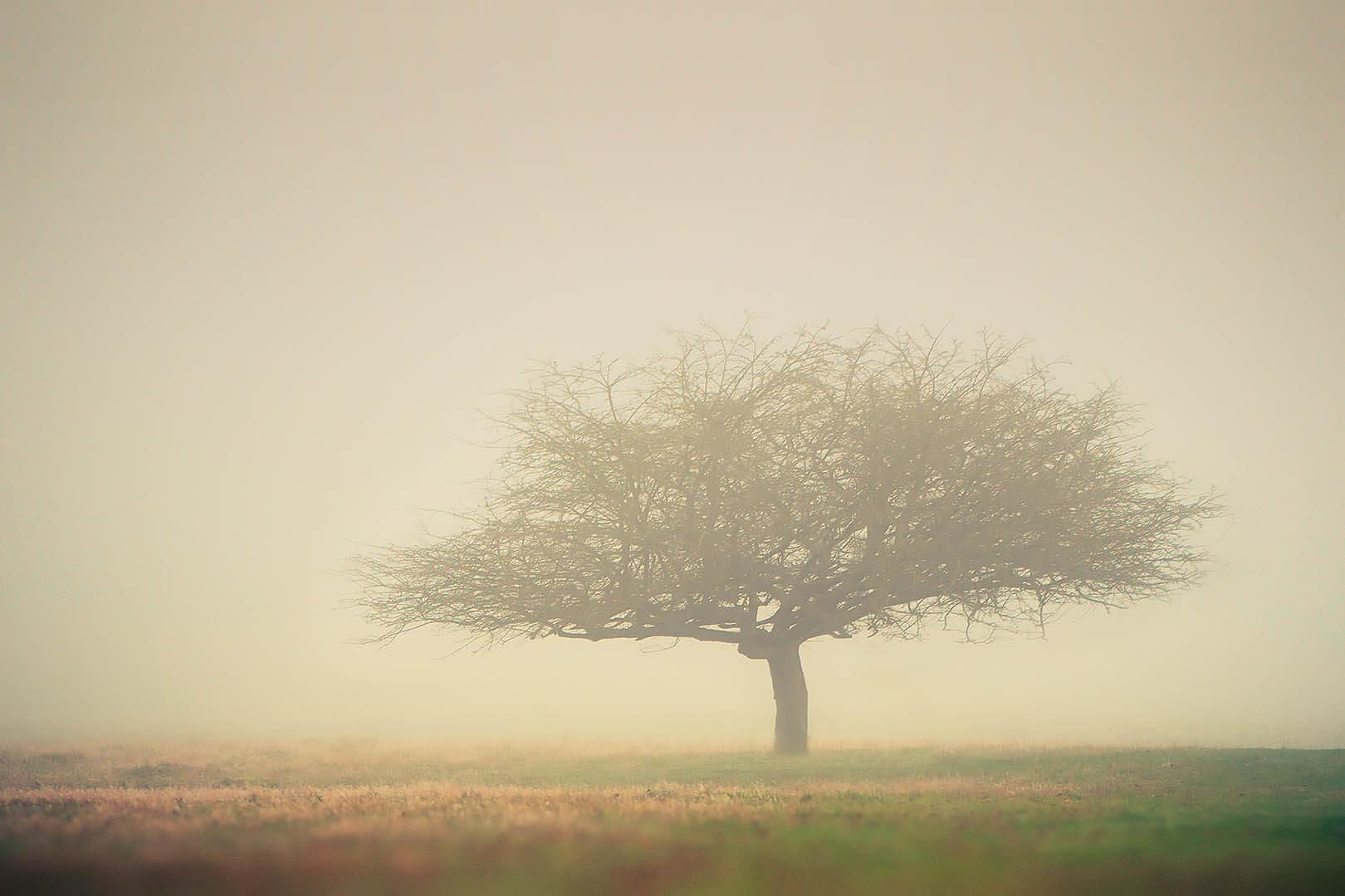 Tree In Fog #1