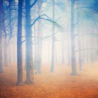 Horsell Trees III