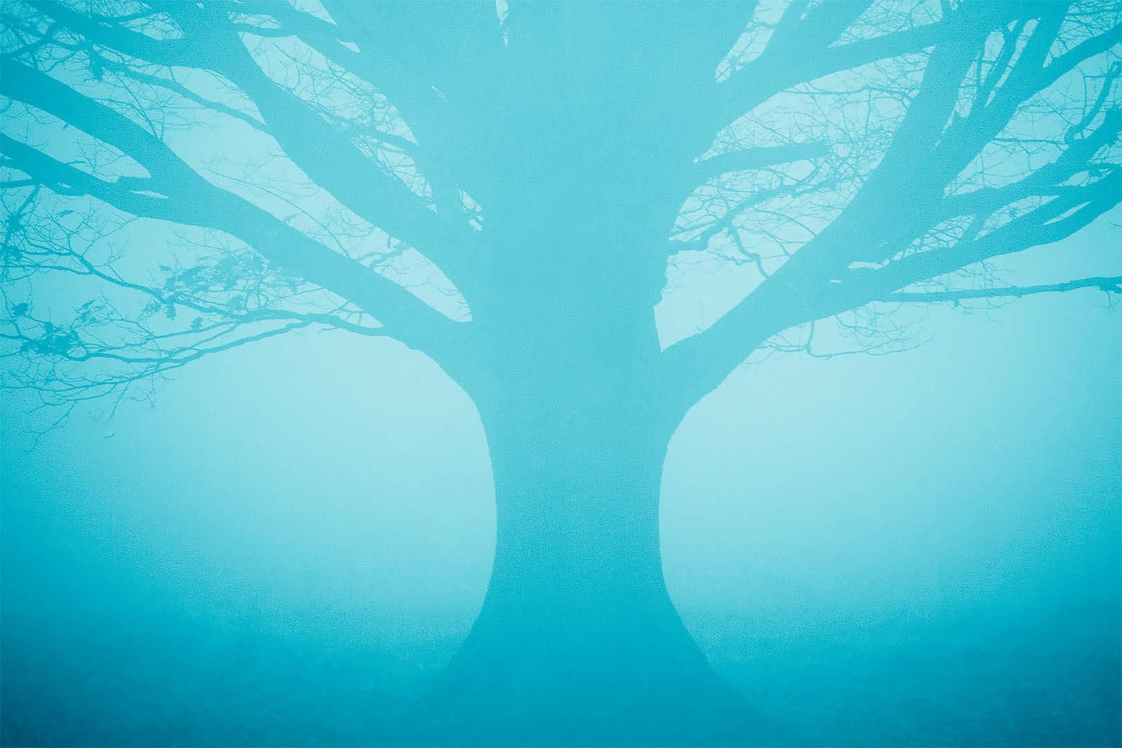 Blue Tree in Fog