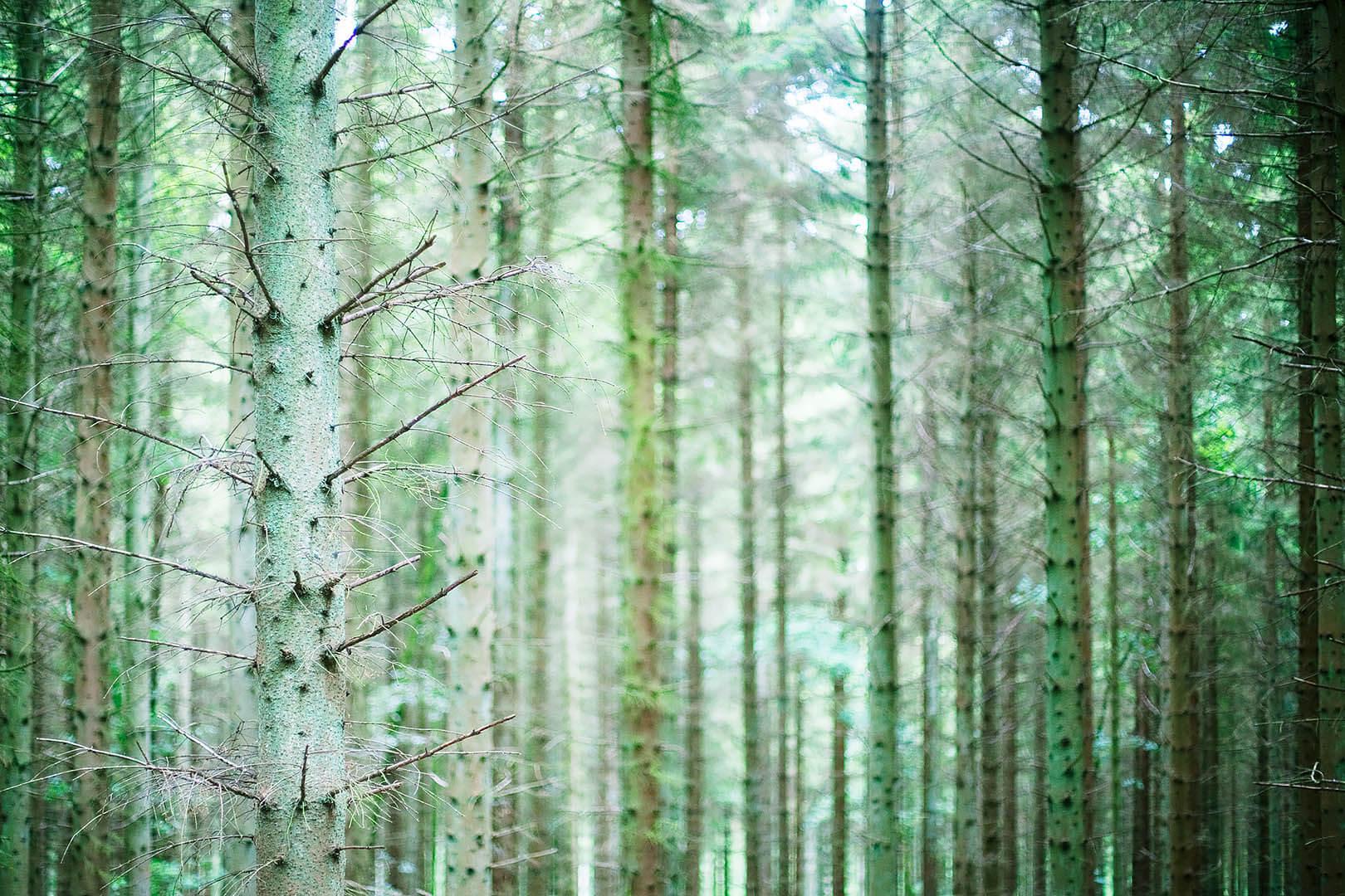 Chawton Park Woods #8