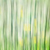 Grass Motion #2