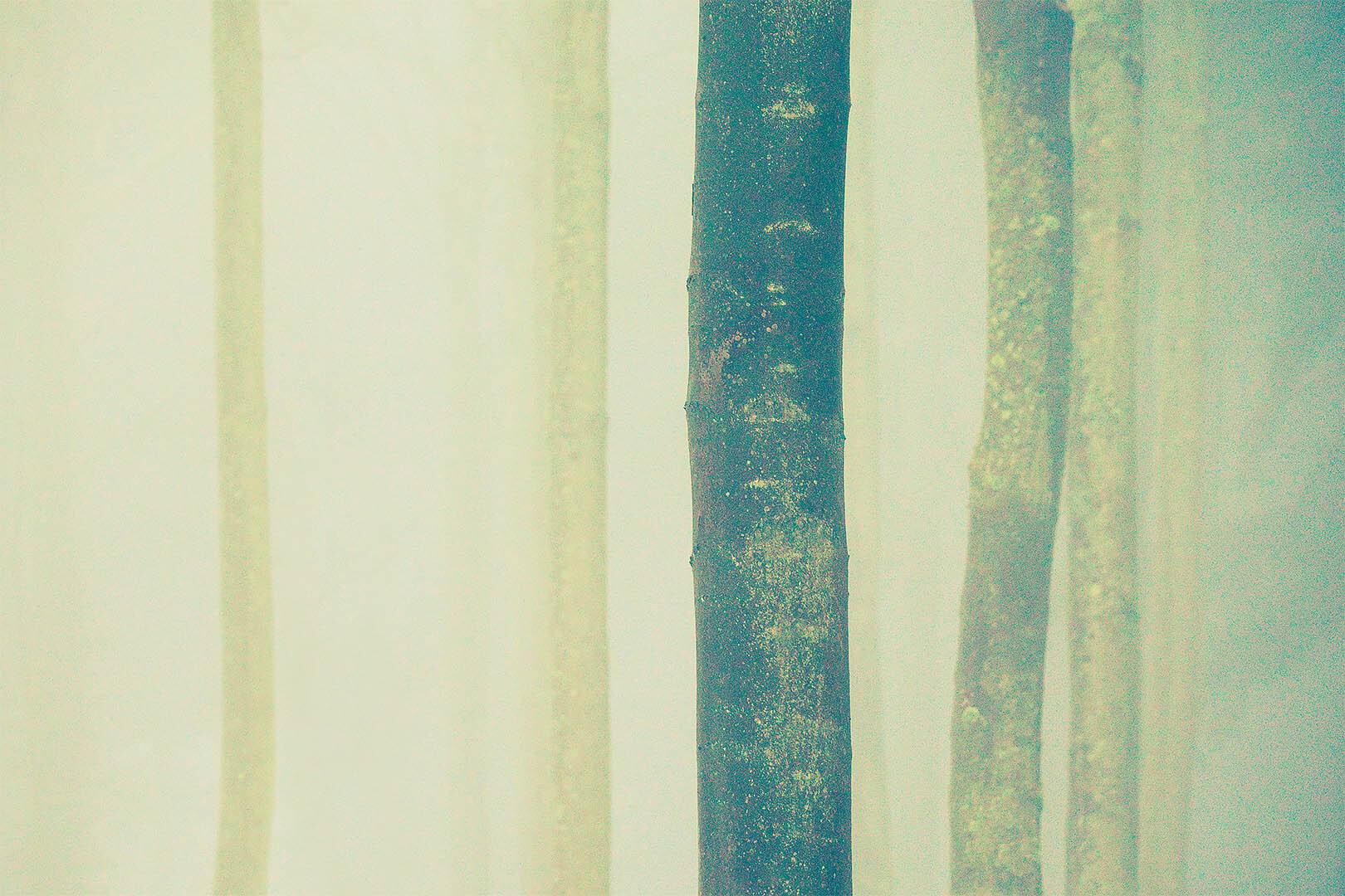 Trees In Fog #3