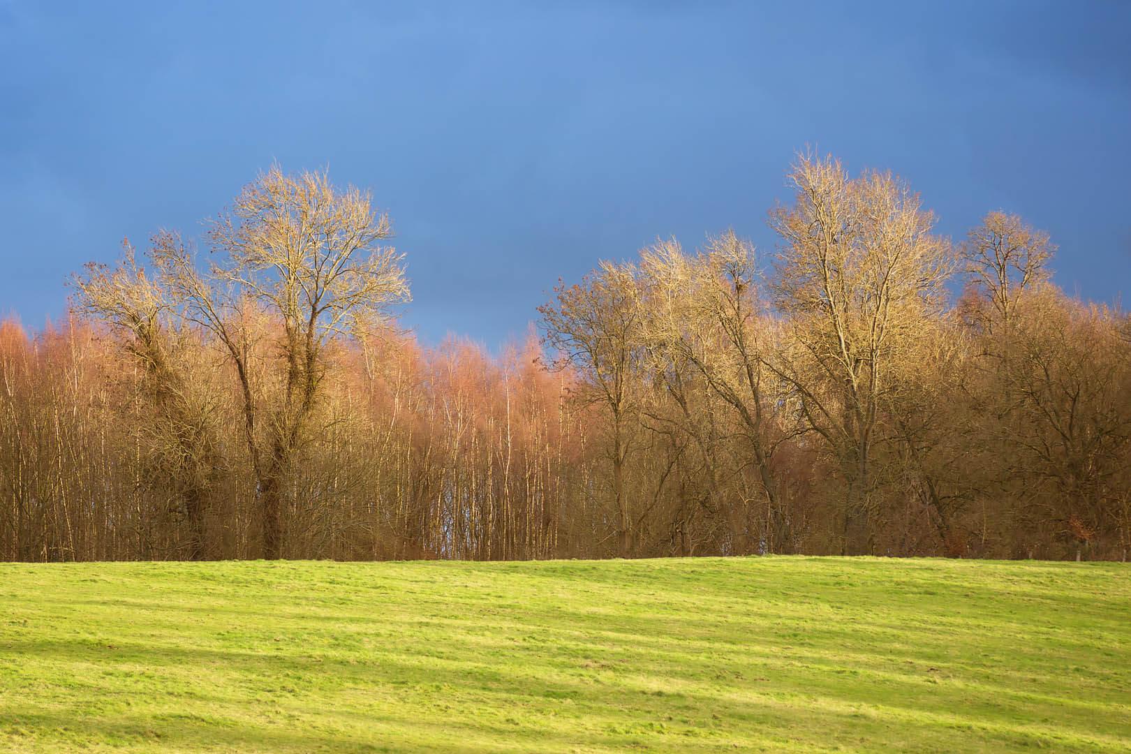 Albury Trees #1
