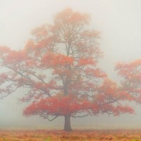 Tree In Fog #2