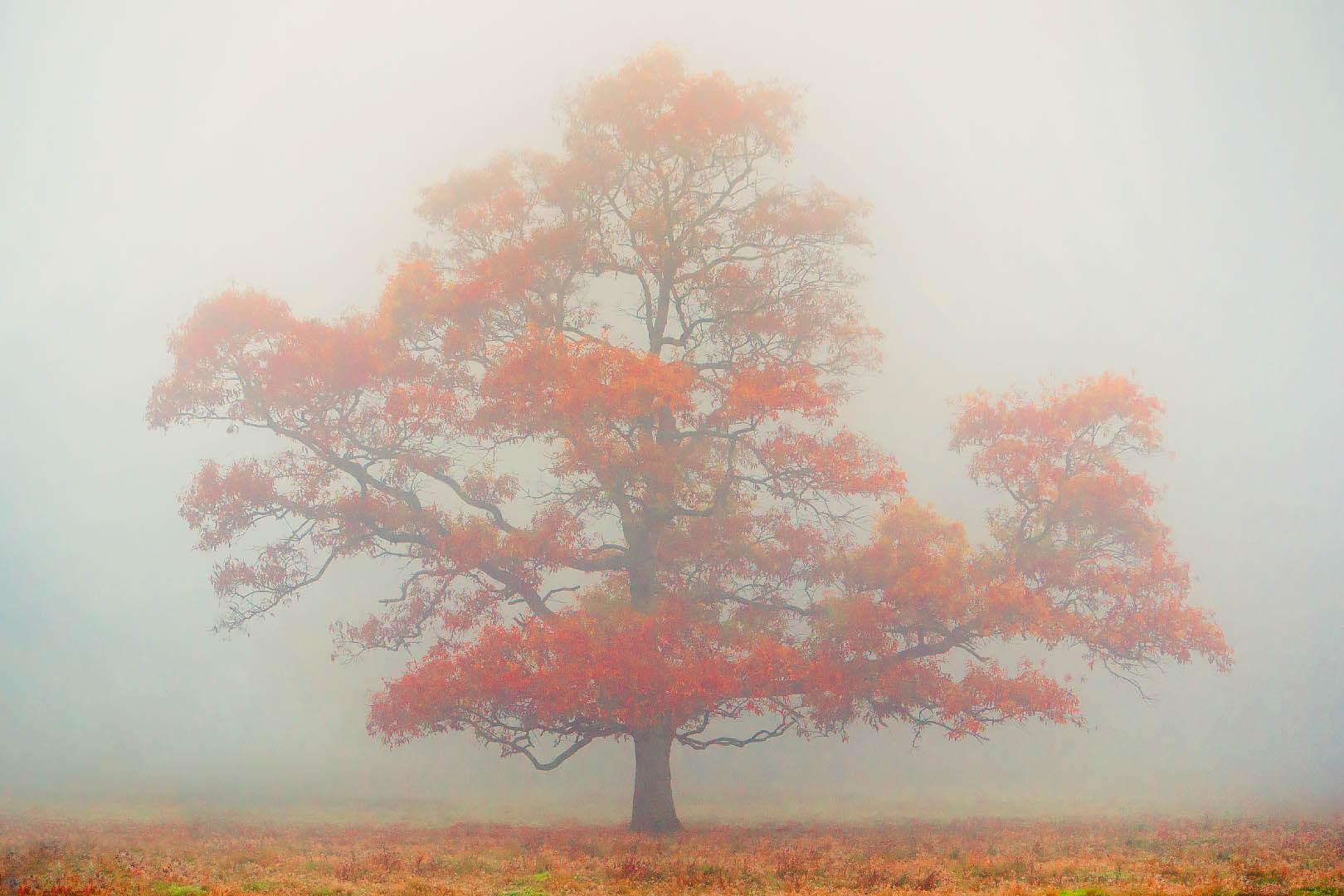 Tree In Fog #2