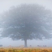 Tree in Fog and Deer