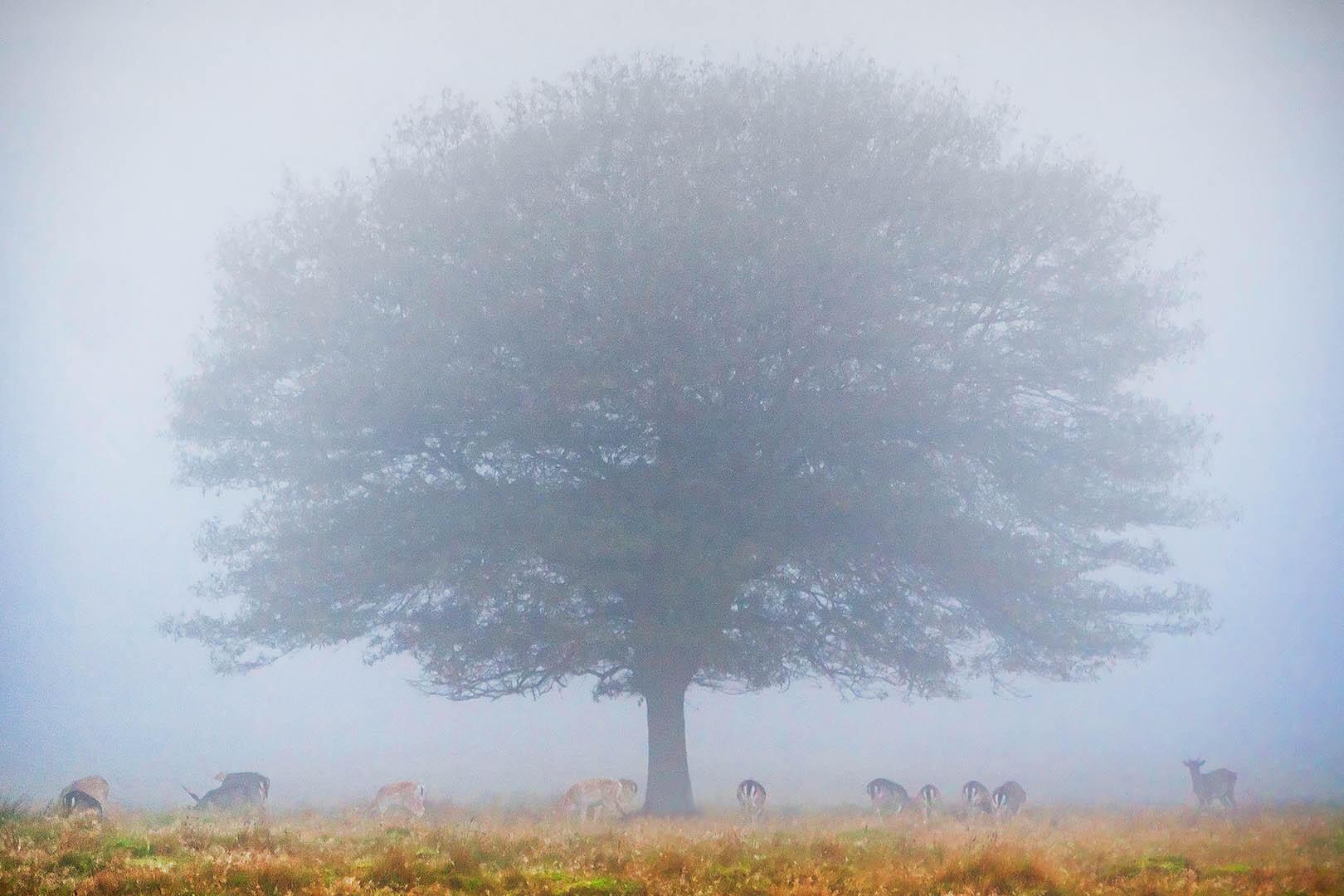 Tree in Fog and Deer