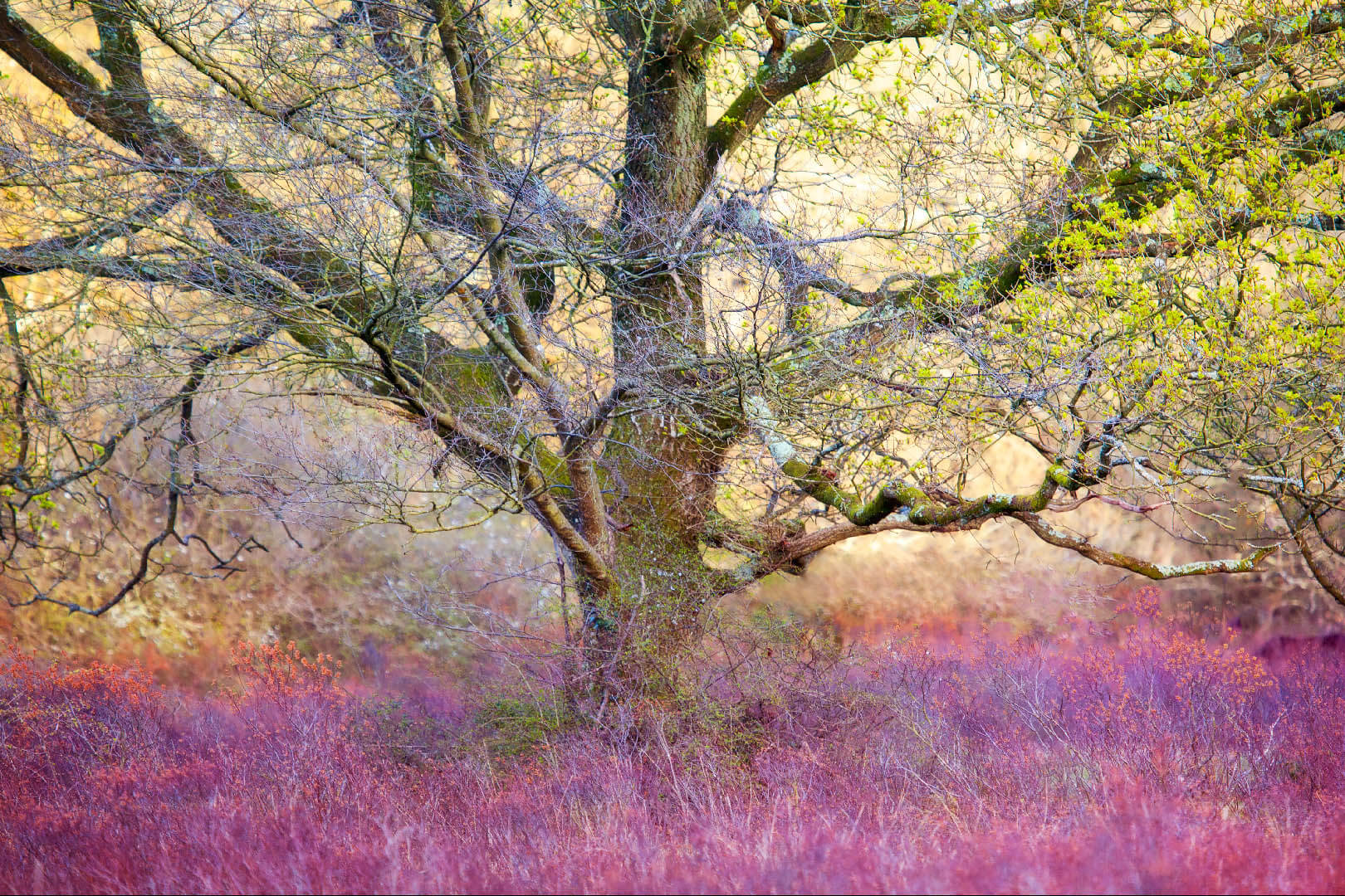 New Forest Tree