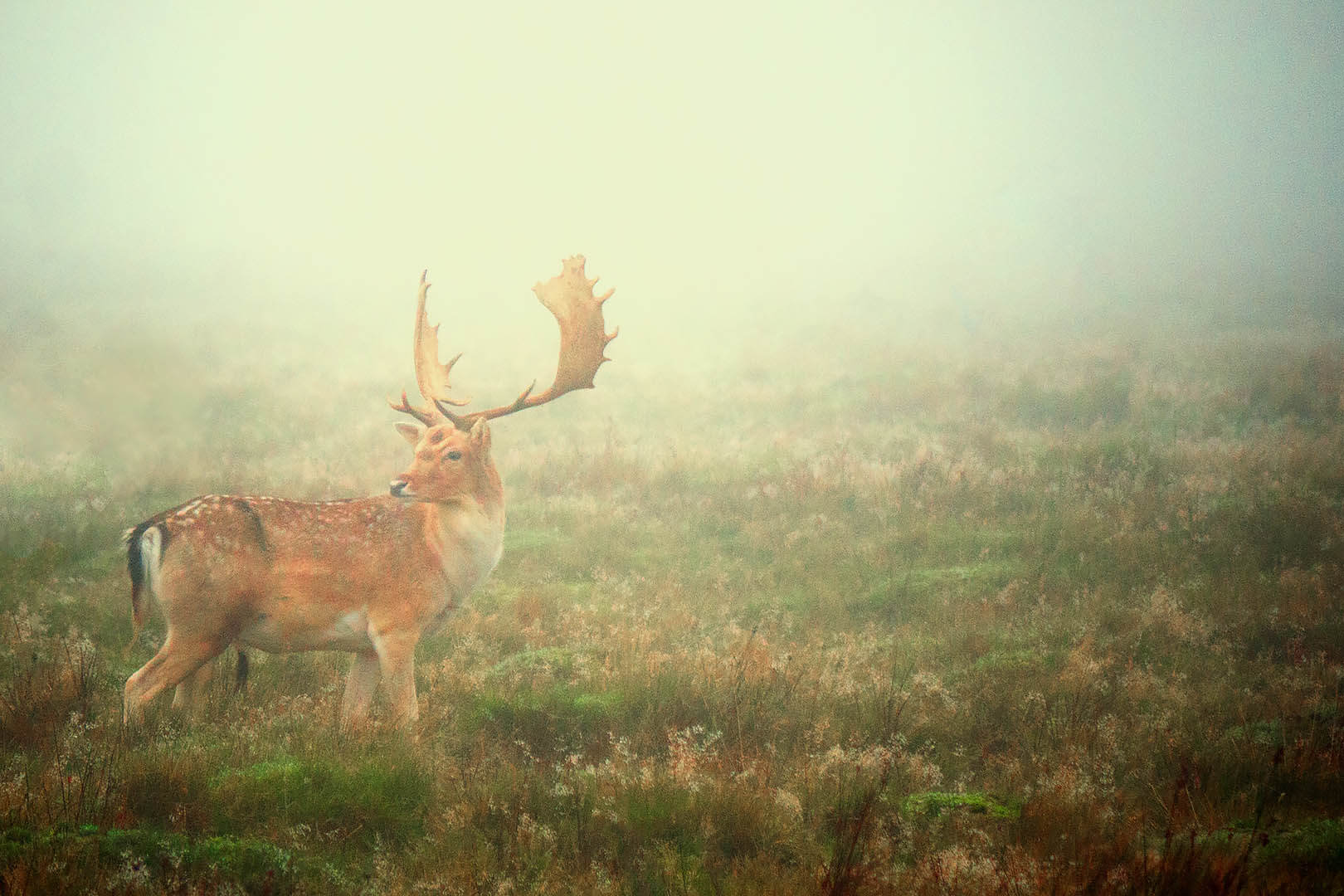 Deer In Fog #2
