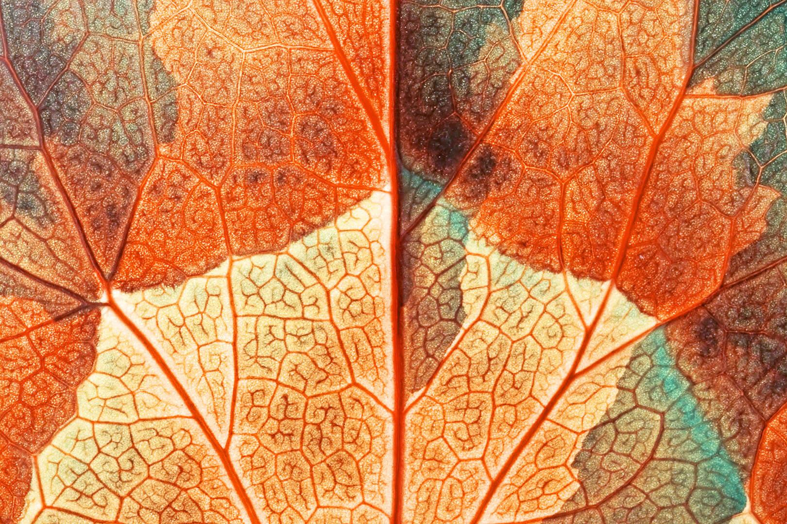 Leaf Texture #3