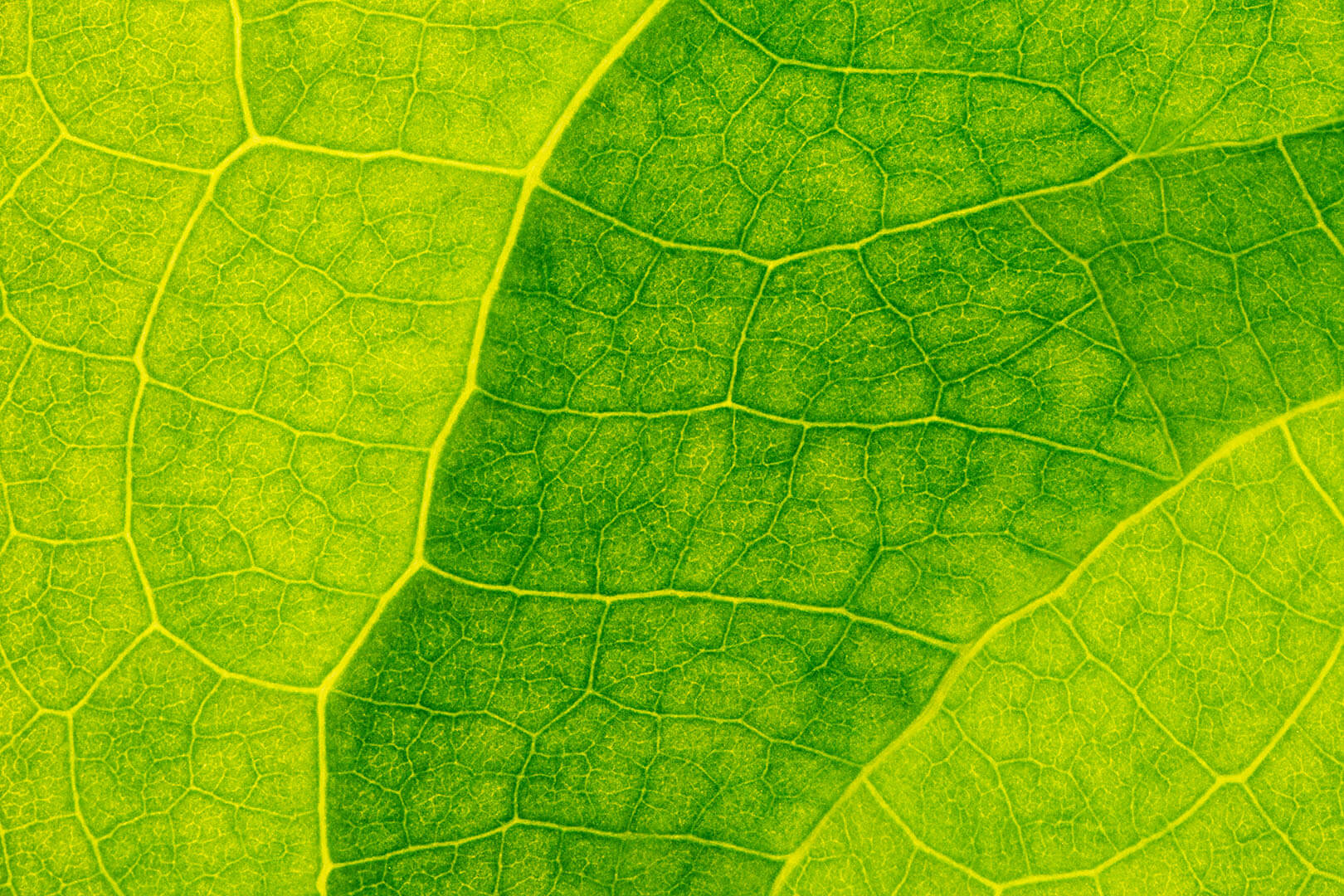 Leaf Texture #4